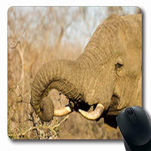 Mousepads Elefant beim Essen Südafrika Wildlife Parks Outdoor Natur Oblong Form Oblong Gaming Mouse Pad Rutschfeste Gummimatte